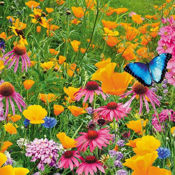 Рай для бабочек
